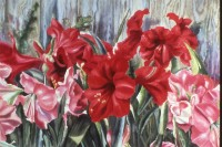 Amaryllis in Play.Dockrill.watercolour.22×30