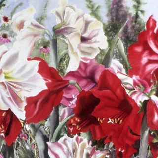 Amaryllis in the Garden.Dockrill.watercolour.22×30
