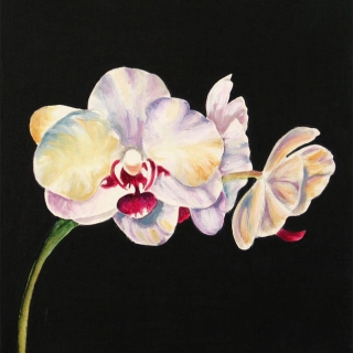 White Orchid 3.Acrylic.16×16.
