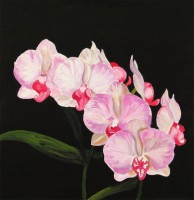 White Orchid 6.Acrylic.16×16.
