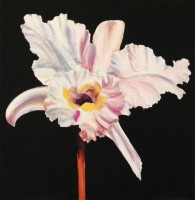 White Orchid 7.Acrylic.16×16.