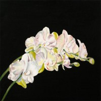White Orchid 8.Acrylic.16×16.