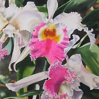 hot pink and white orchids.watercolour.30×22.