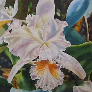 white orchid.watercolour.30×22