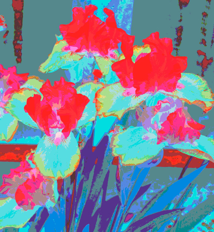 Electric Irises.Digital Image. Dockrill