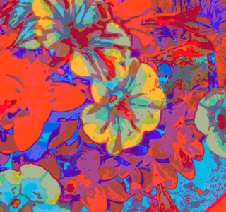 Petunia Riot. Digital Image. Dockrill