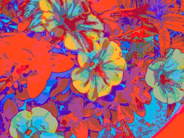 Petunia Riot. Digital Image. Dockrill